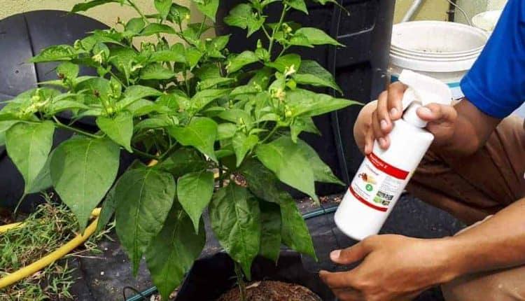 Cara Mengawal Serangan Serangga Dengan Kawalan Repellente 1